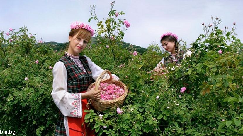 Старая розоварня в городе Стрелча