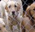 Количество усыновленных бездомных собак в Болгарии в прошлом году увеличилось на 22.5%